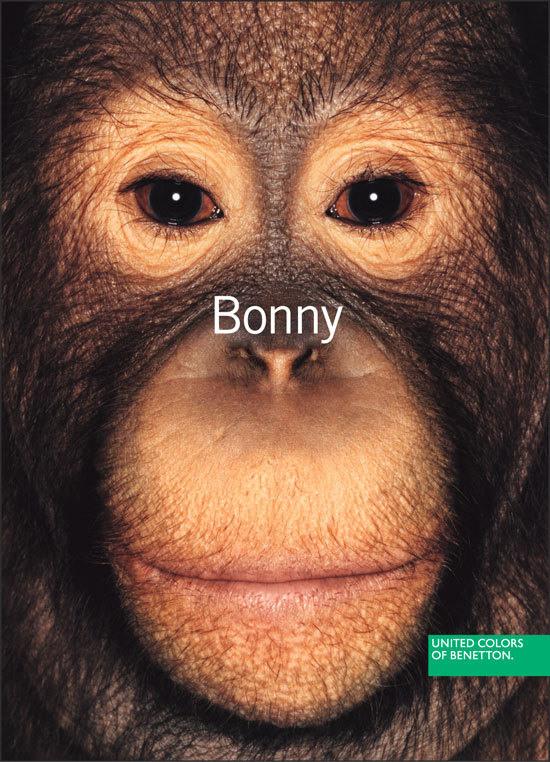 8 Изображение о проблемах приматов, страдающих, вымирающих, содержащихся в жутких условиях