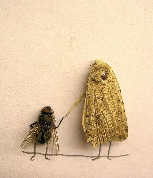 ...юмористических фотографий использовал в качестве моделей дохлых мух.