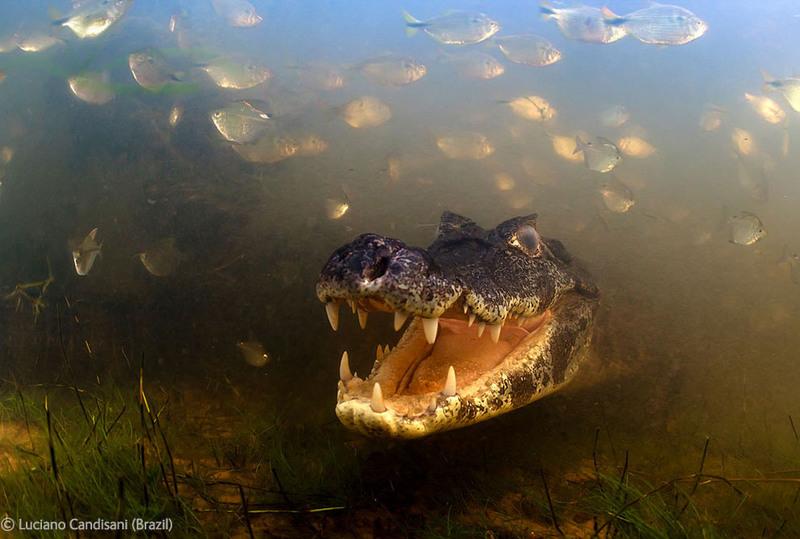 http://i.photographers.com.ua/thumbnails/lenta/819/640x15819.jpg