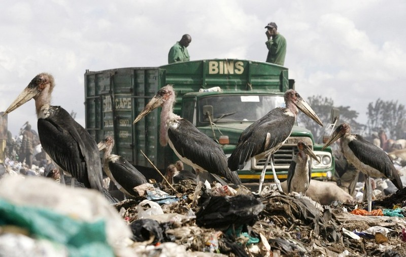 30.Фотография - REUTERS/Thomas Mukoya.