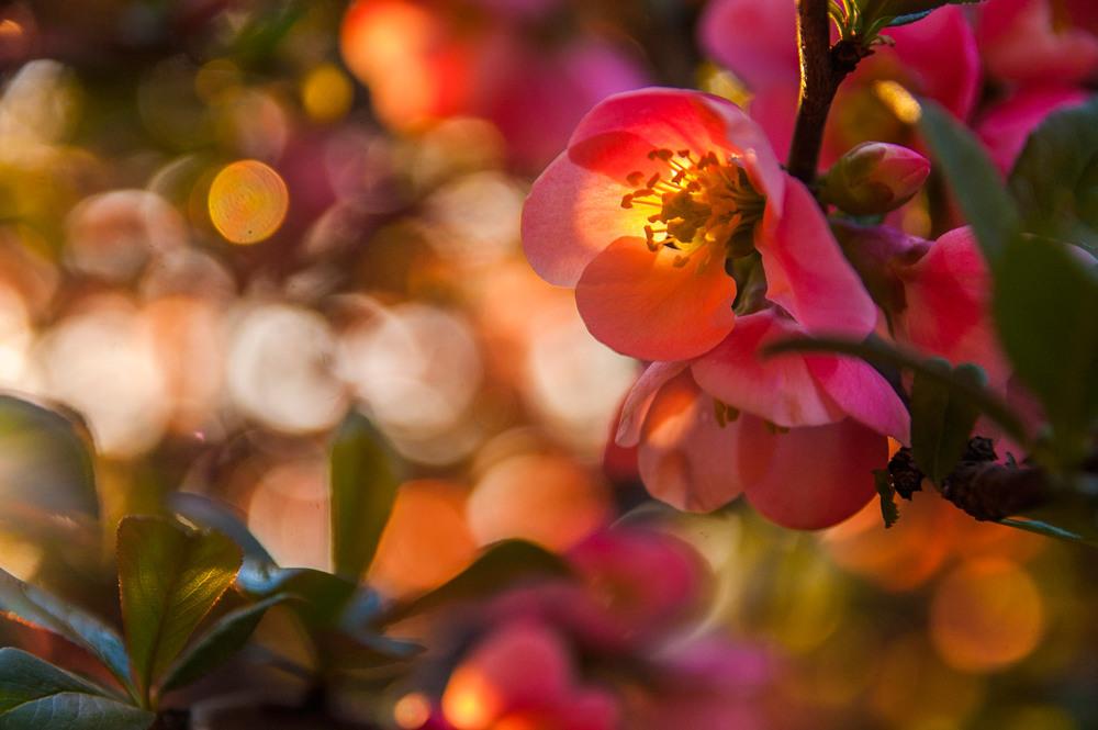 Фотография квіти сонячного світла