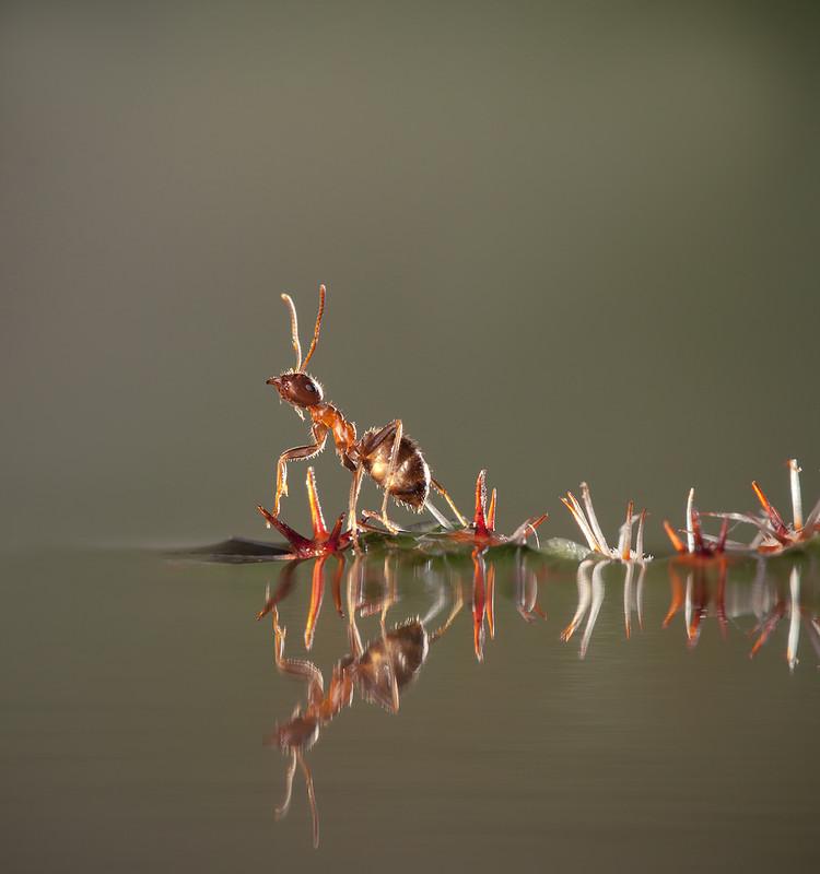 http://photographers.com.ua/thumbnails/pictures/12192/800xozor.jpg