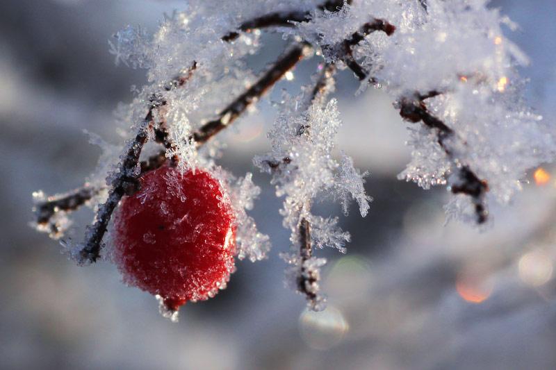 фото прощай зима функции
