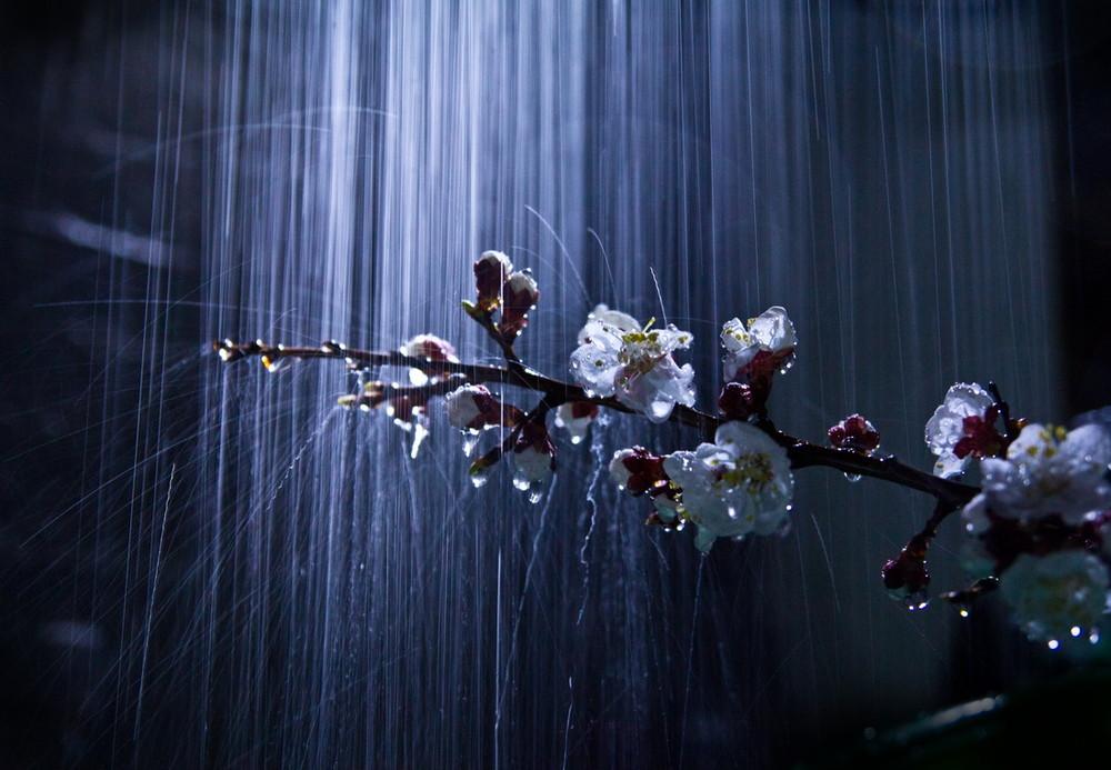 """Результат пошуку зображень за запитом """"весенний ливень"""""""