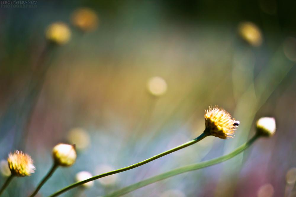 http://photographers.com.ua/thumbnails/pictures/16970/800xsummer_paints_1000x667.jpg