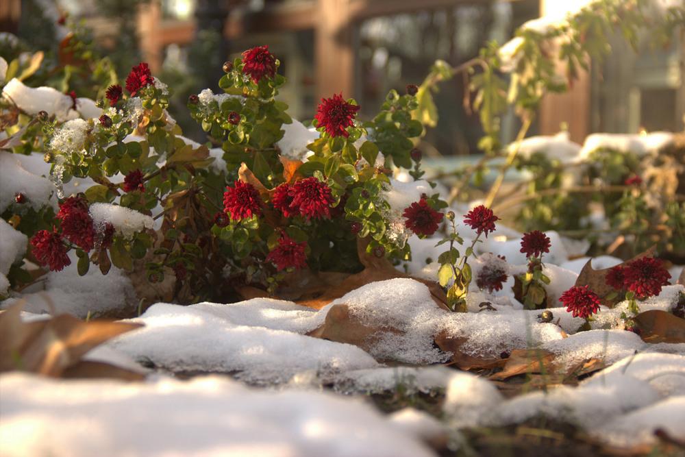 днем зима пришла картинки красивые ждут аппетитные сочетания