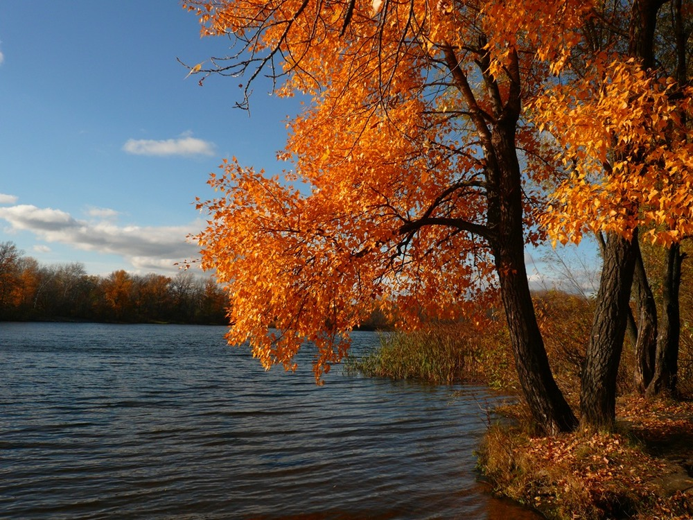 фото картинок золотой осени для