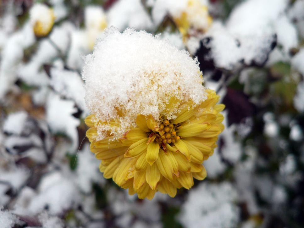 картинки ноябрь цветы