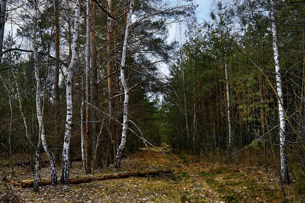 У лісі на Рахівщині знайшли труп чоловіка