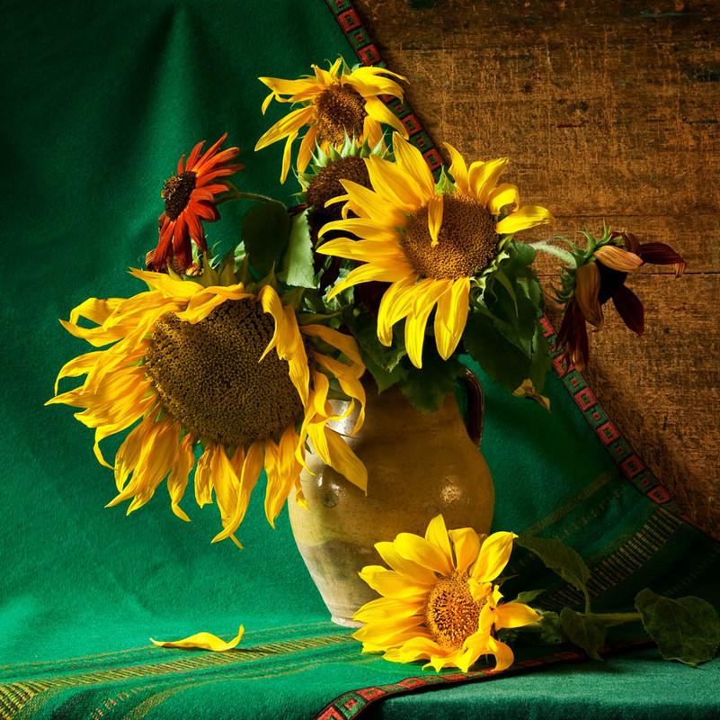 соняшники фото