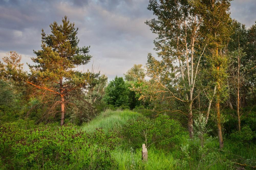 Картинки по запросу лес орельский