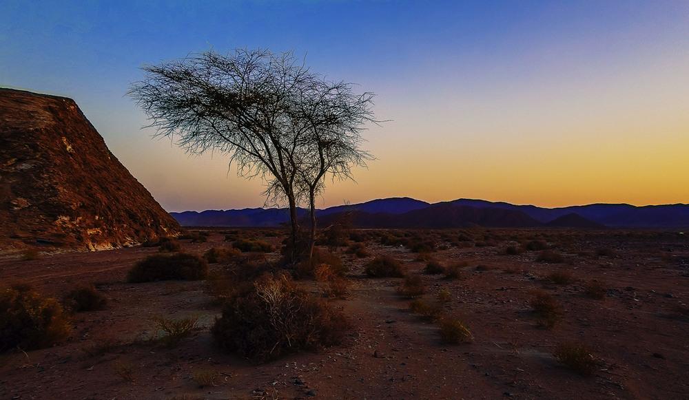 распознать качественное деласерас африка фото прошлом году