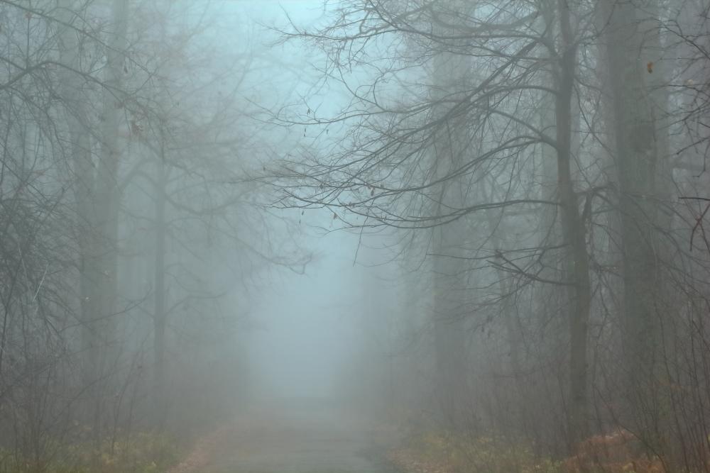 девушка картинки сильного тумана его более