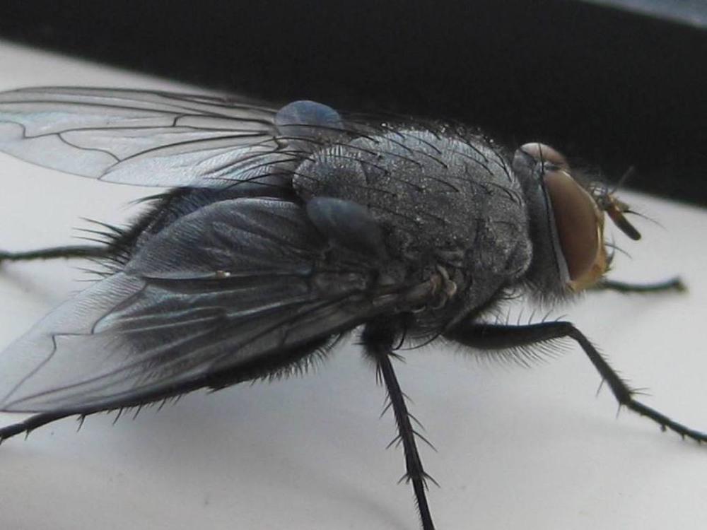 покажи картинки мухи конкурс конкурс