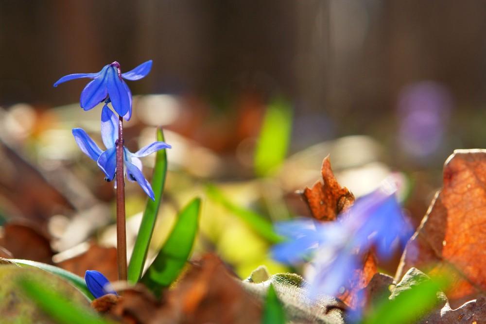 дыхание весны фото модели зимних
