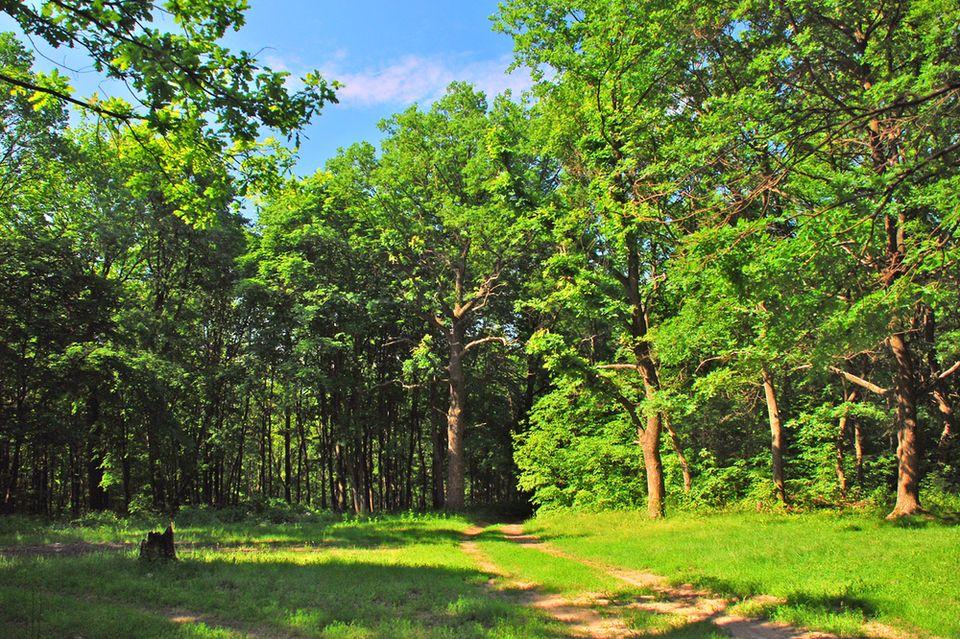 картинки лесных опушек используя