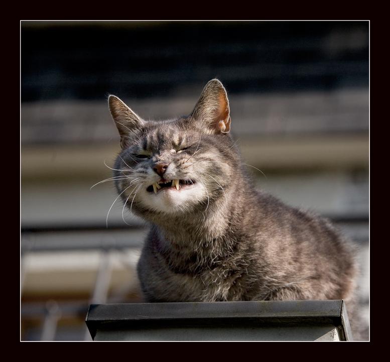 Картинки для, картинка с надписью кот в отпуске я за него