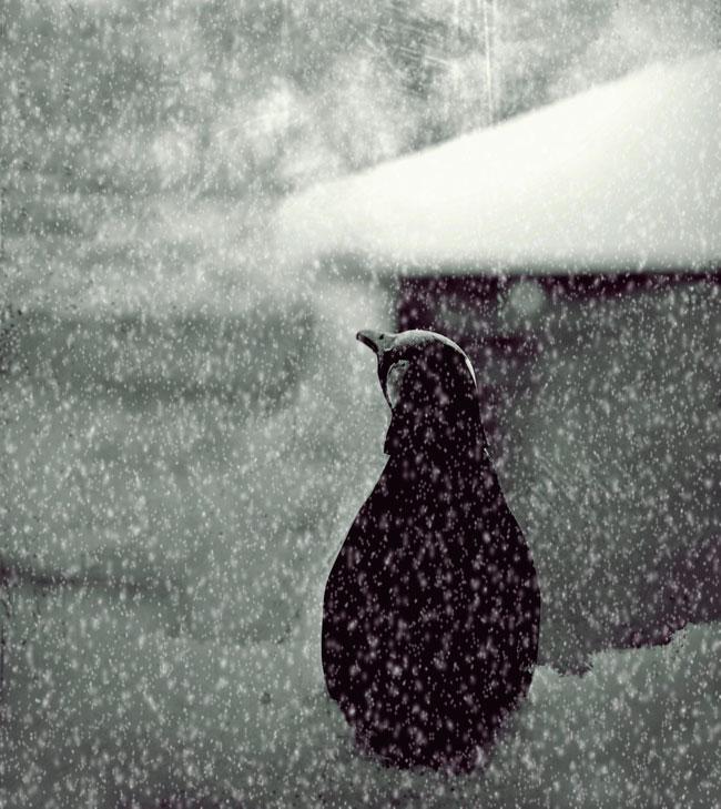 грустный пингвин картинка арбалеты, хоть