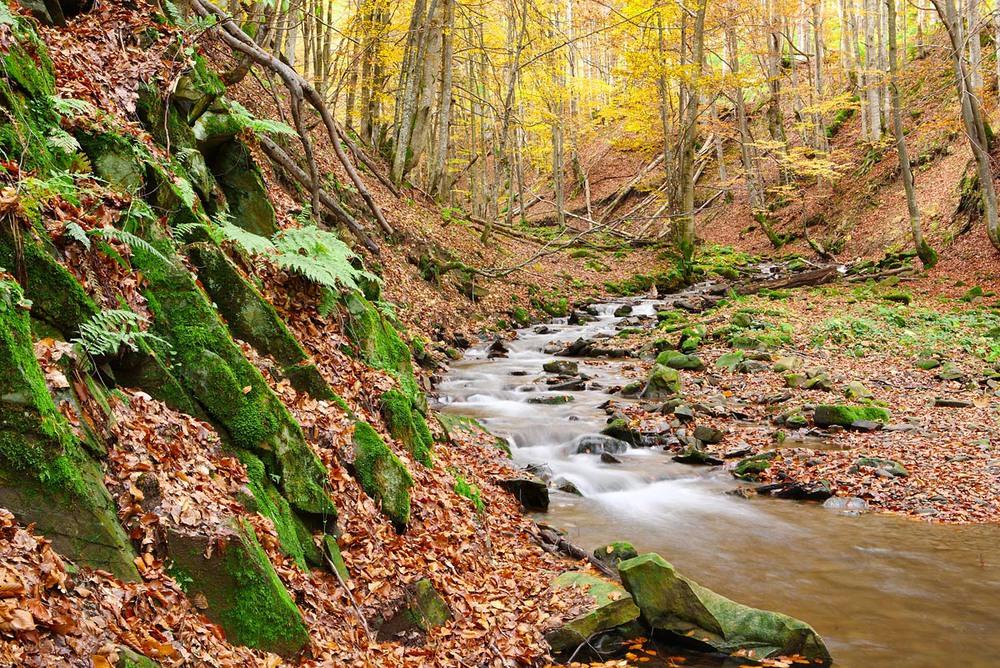 Фотография Струмок в осінньому лісі / Віталій Ра / photographers.ua