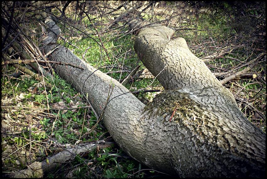 http://photographers.com.ua/thumbnails/pictures/9086/800xelo-v-lesu.jpg